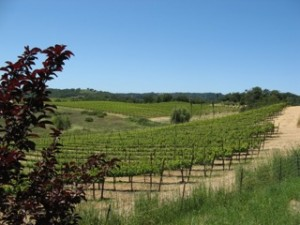 hogan's run vineyard